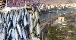 المواطنون يشكون شحة وغلاء اسعار الاسماك في مناطق ساحل حضرموت