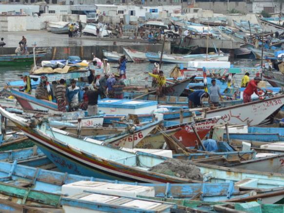 صيادو المناطق المحررة بالساحل الغربي يستعيدون الأمل